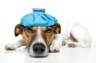 Assicurazione cane: rc e spese veterinarie.