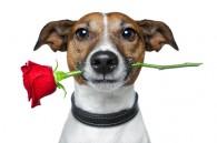 Responsabilità Civile della Famiglia – Parte 1- il cane innamorato