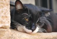 Responsabilità Civile Famiglia – parte 2 – il gatto volante