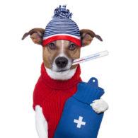 Invalidità permanente da malattia, rimborso spese dentistiche e spese veterinarie.